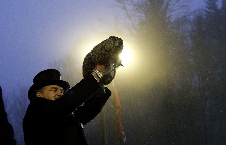 Punxatawney Phil on Groundhog Day