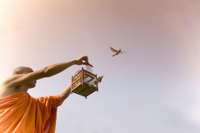 Monk Releasing Bird