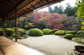A zen garden with open, gravel area surrounded by shrubs and trees.