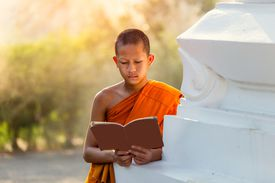 Young monk reading