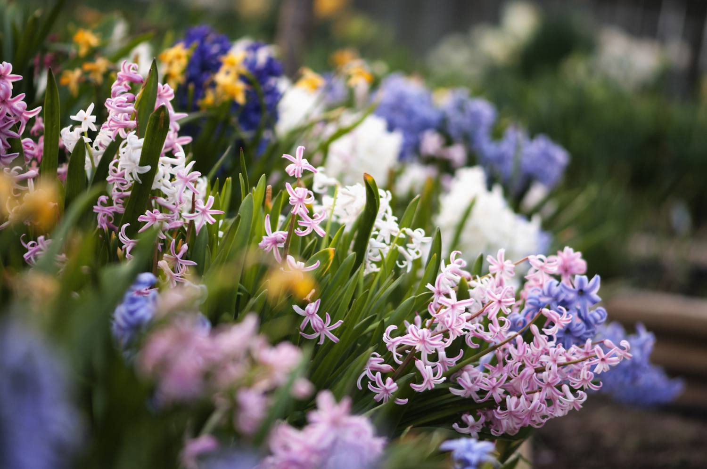 Bring flowers indoors to celebrate Beltane.