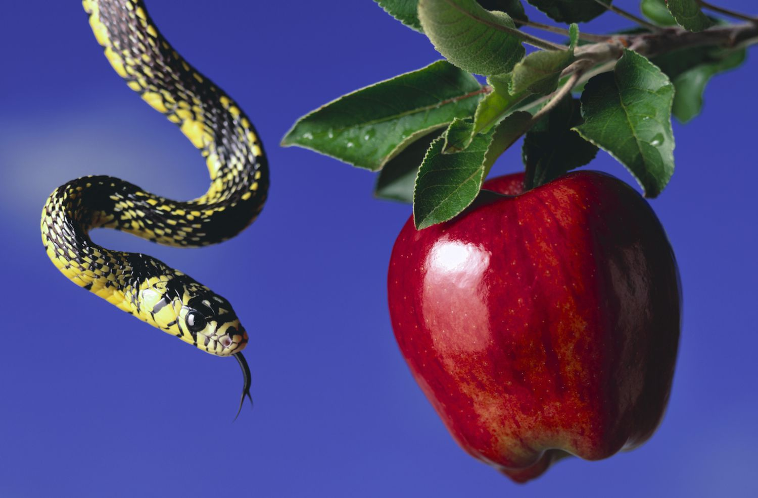 Serpent and Apple