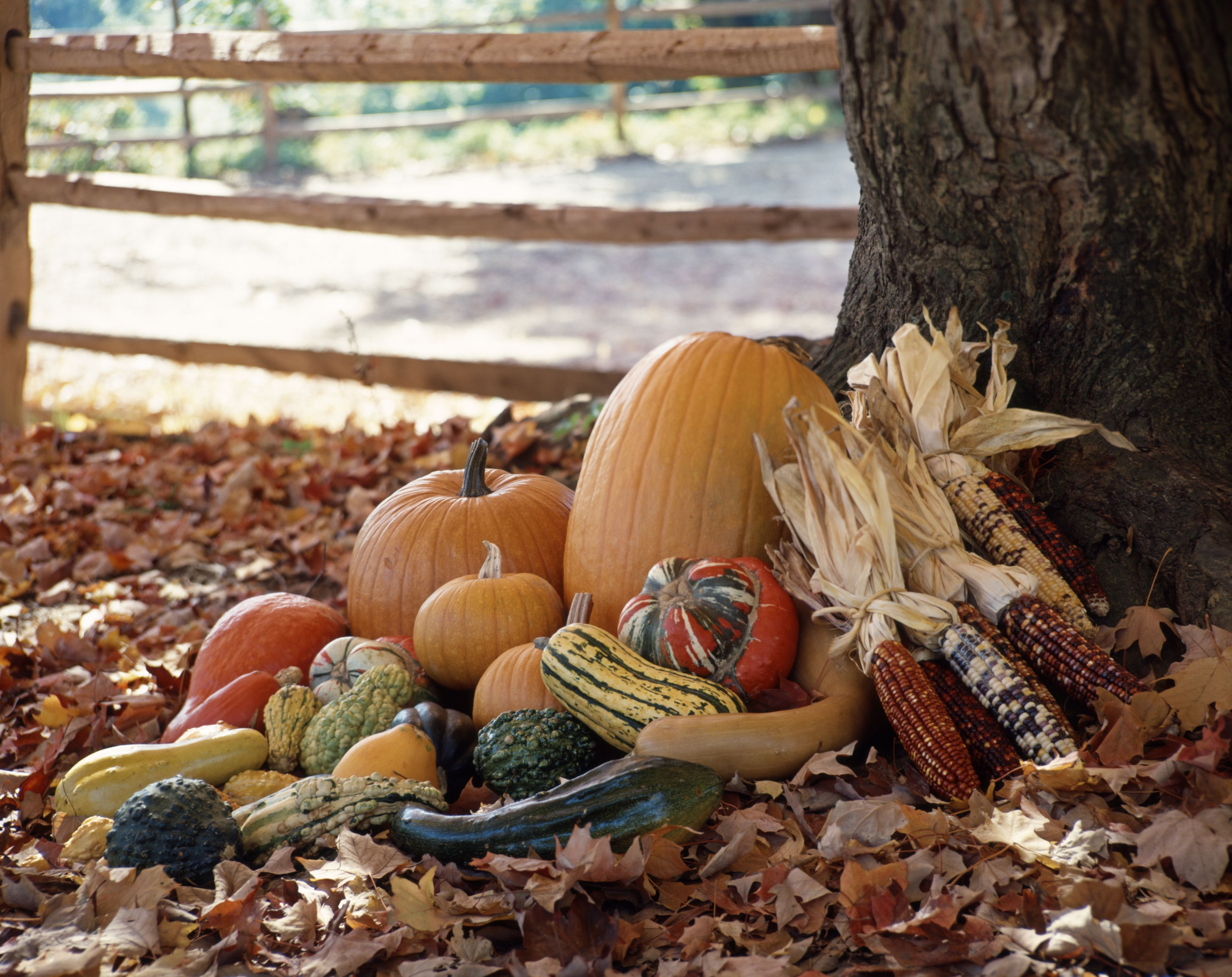 GROUPING OF AUTUMN...