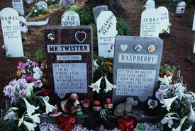 pet cemetery animals heaven afterlife