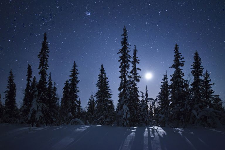 Full Moon Over Snowy Forest