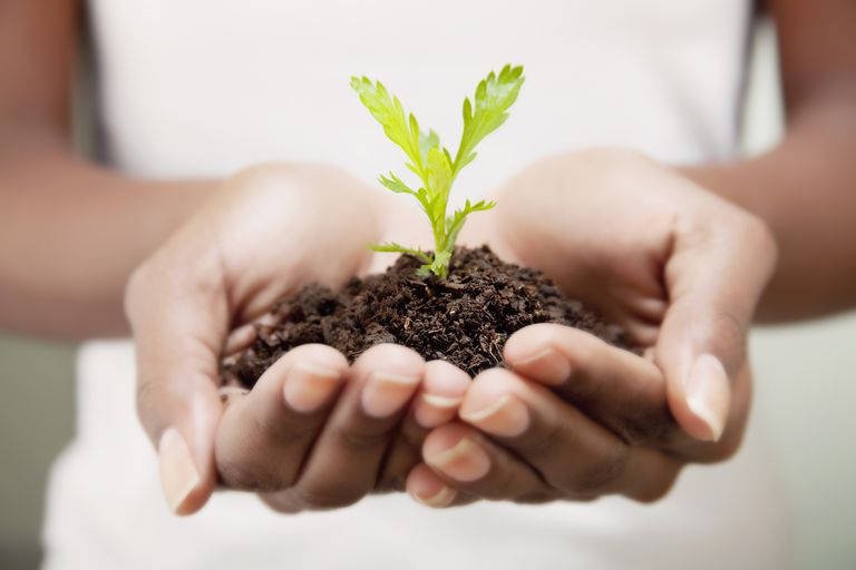 Close-up of a woman's hands holding a seedling