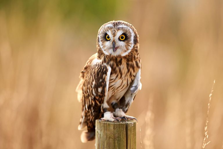 Owl Magic Myths And Folklore