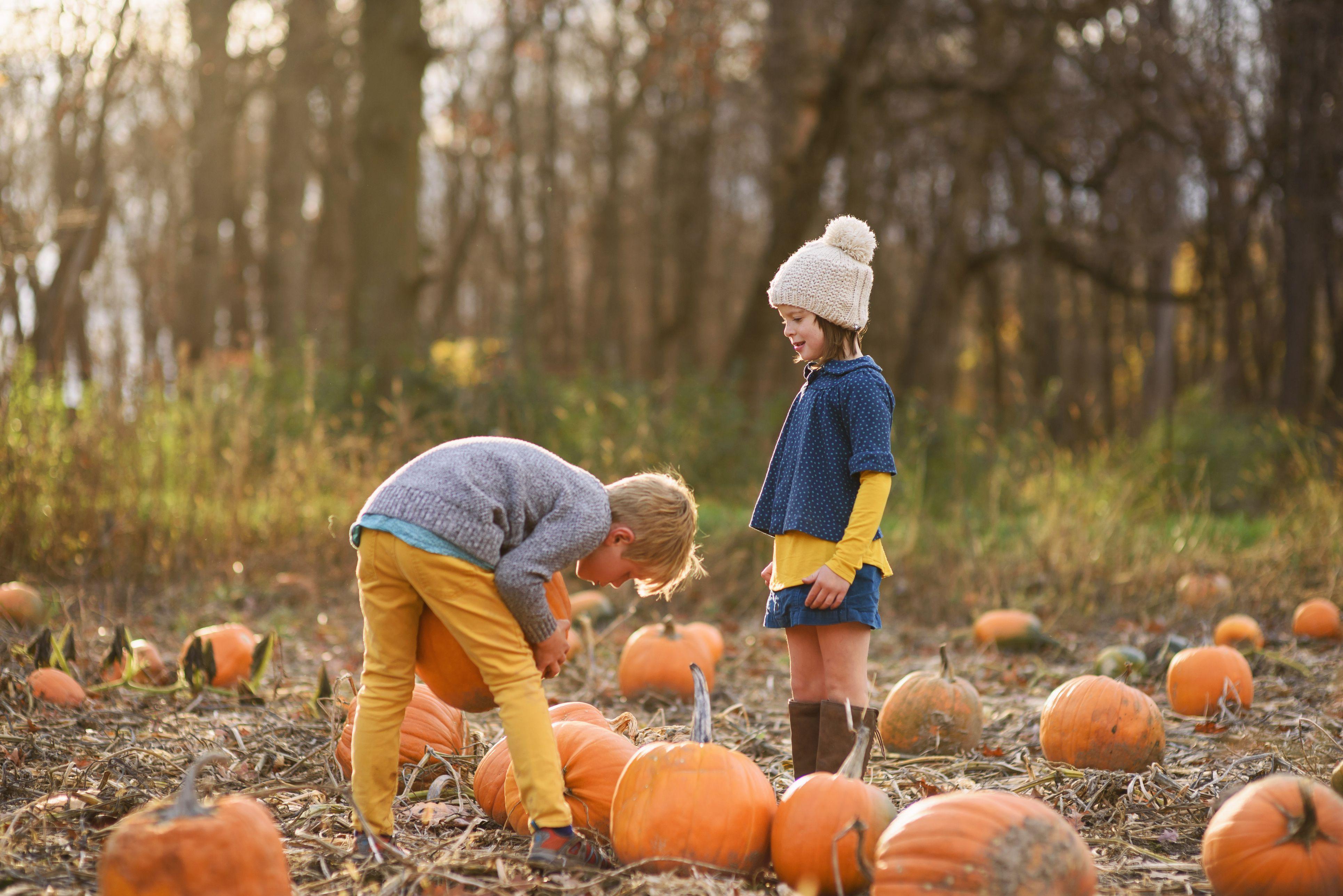 Boy and girl picking pumpkins in a pumpkin patch