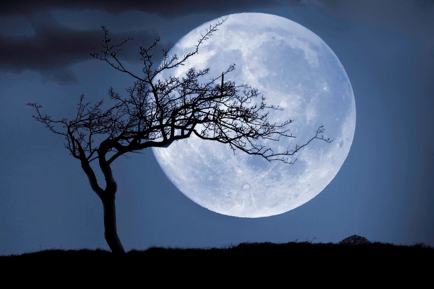 Silhouette of a tree in front of a huge full moon