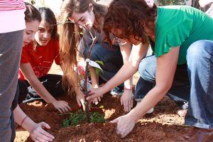 Tu B'Shevat planting trees in Israel