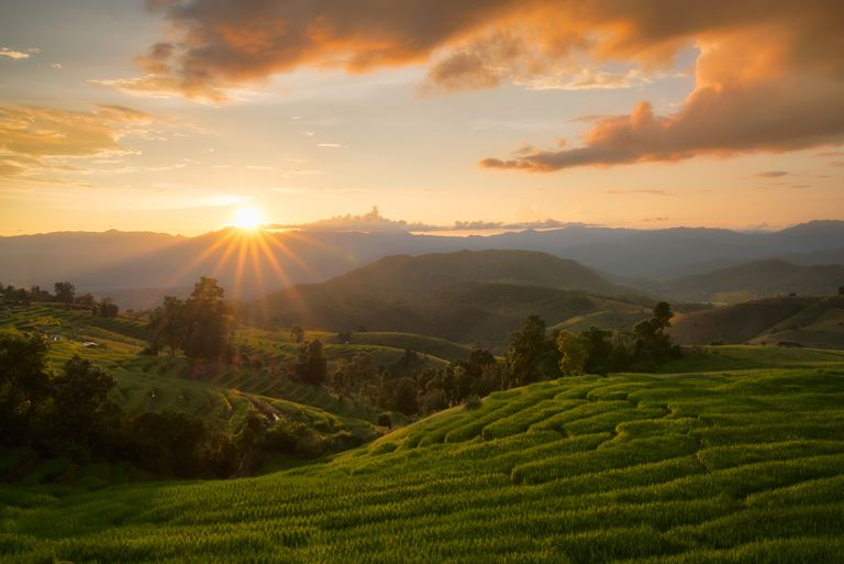 Golden rice fields in the countryside of Thailand The beautiful sunset at Terraced Paddy Field in Mae-Jam Village , Chaingmai Province of Thailand
