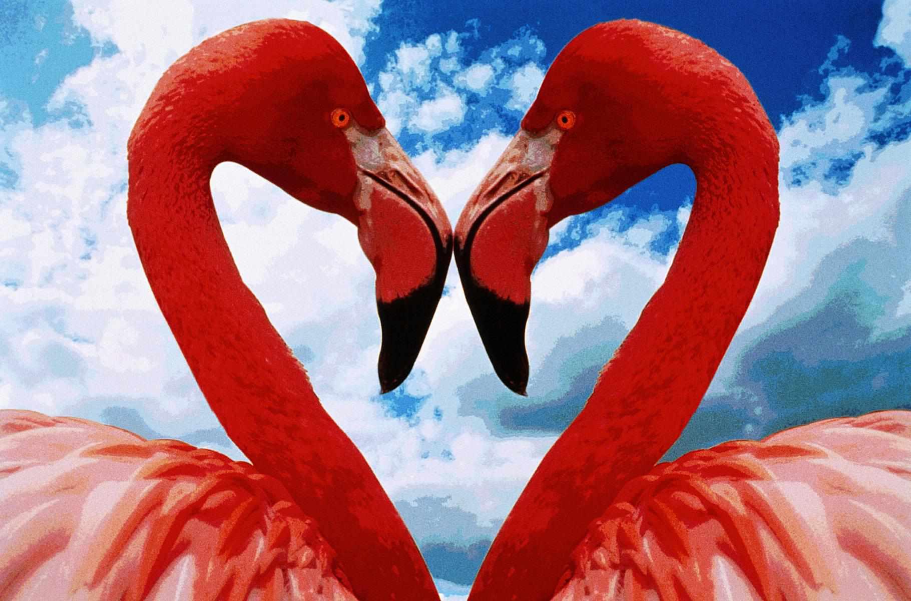 Two Flamingos beak to beak