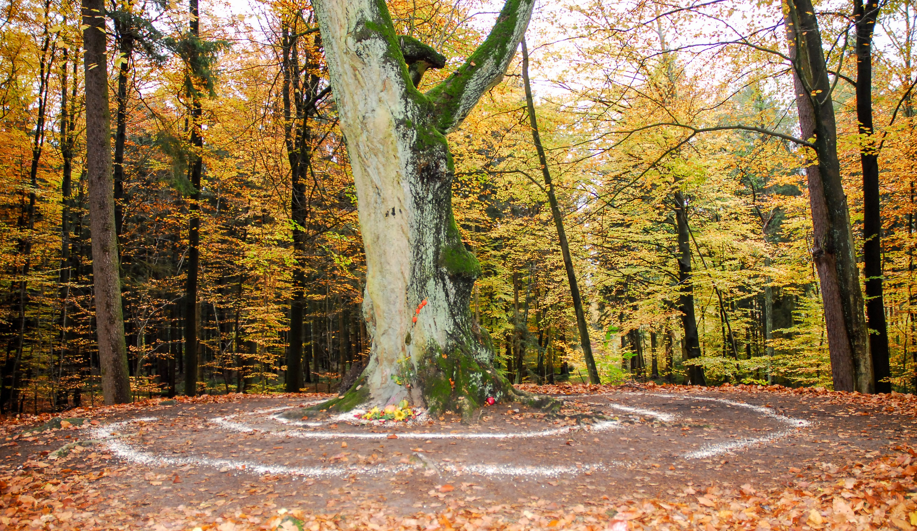 Pagan altar and spiral works outside next to a tree. Wicca and witchcraft.