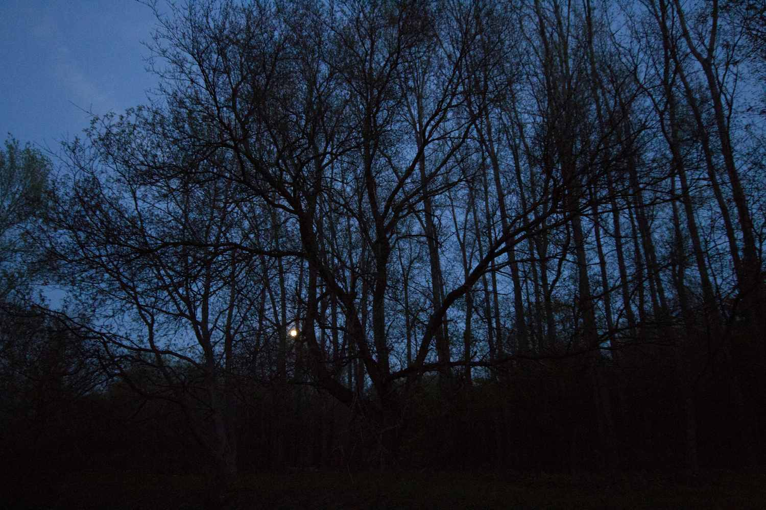 Trees in the Darkness