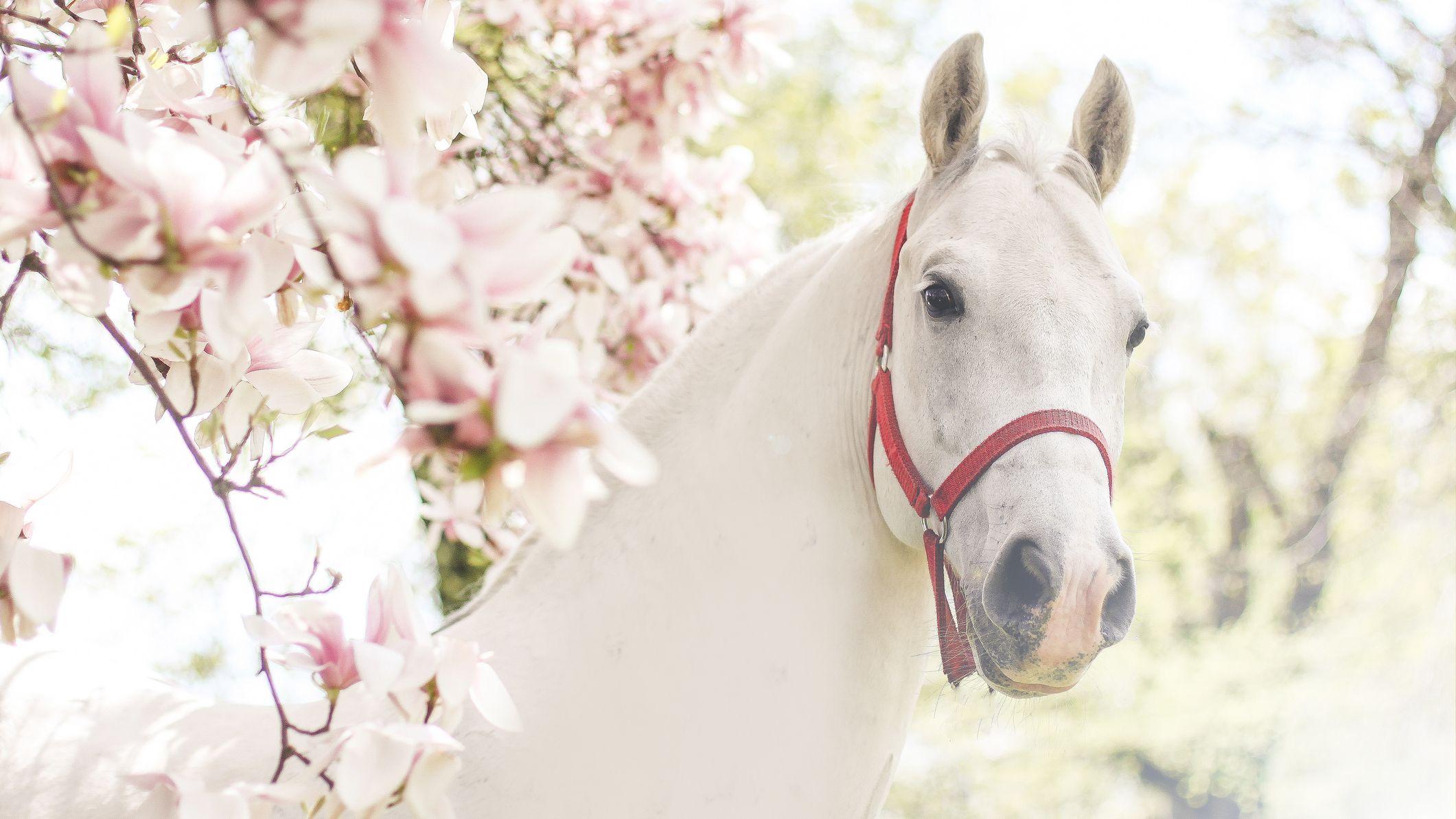 Jesus White Horse In Revelation