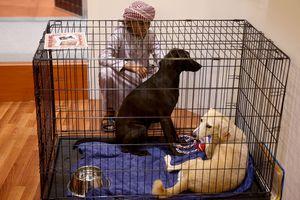 Dogs in Islam
